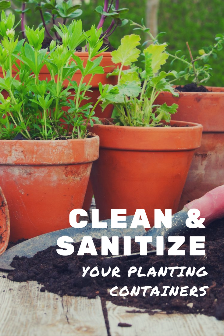 sanitize flower pots