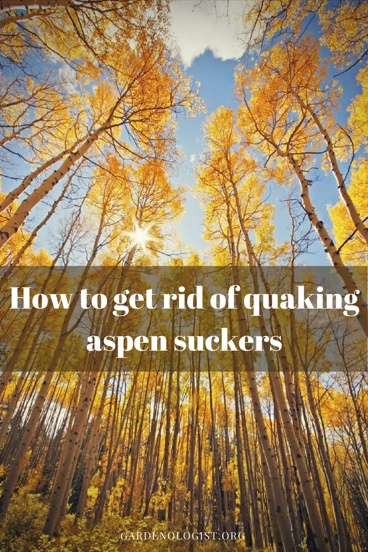how to get rid of wasps in aspen trees
