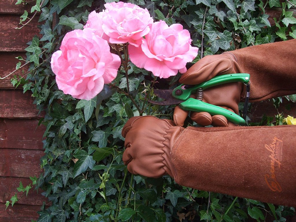 An in-depth guide on how to repot roses | Gardenologist